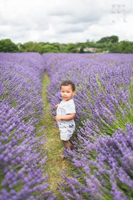 MTP_lavenderfarm_2