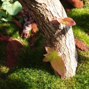 根元から新芽が吹き出したチャンドラーの木