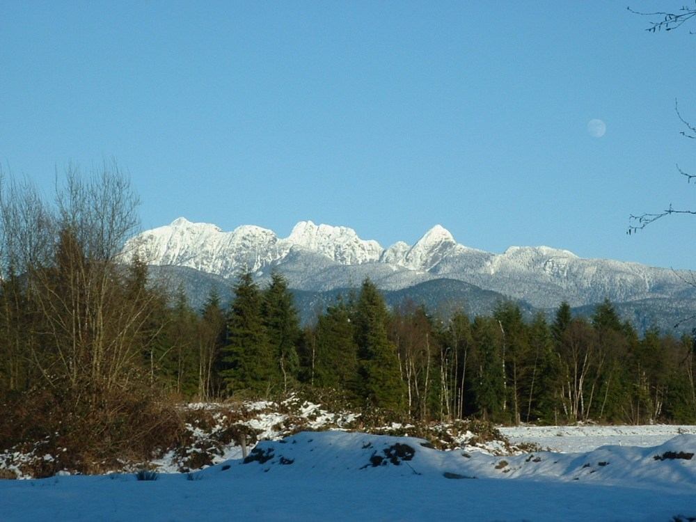 The blueberry farm in Pitt Meadows, B.C...click on pictures to enlarge. (3/3)
