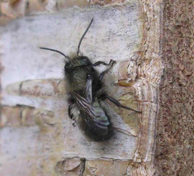 Mason bee nests (3/3)