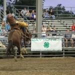 2019dayton FFA rodeo 20