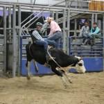 2019dayton FFA rodeo 26