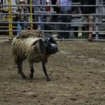 2019dayton FFA rodeo 32
