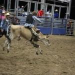 2019dayton FFA rodeo 61