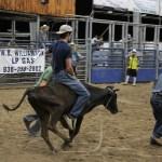 2019dayton FFA rodeo 65