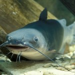 0720catfish