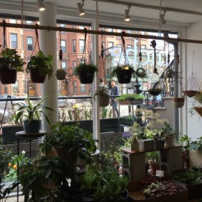 Niche – urban garden supply {Decorate: Boston}