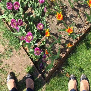 Sun Cups and Gumdrop Tops: Blooms at the Boston Public Gardens