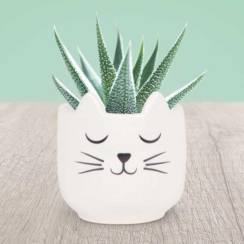 Mini-krukke - Katt Image