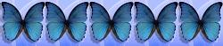 5 Schmetterlinge von 5
