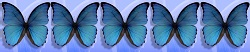 Schmetterling5von5