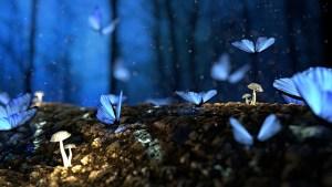viele blaue Schmetterlinge sitzen auf dem Waldboden, auf diesem sind noch leuchtende Pilze zu sehen