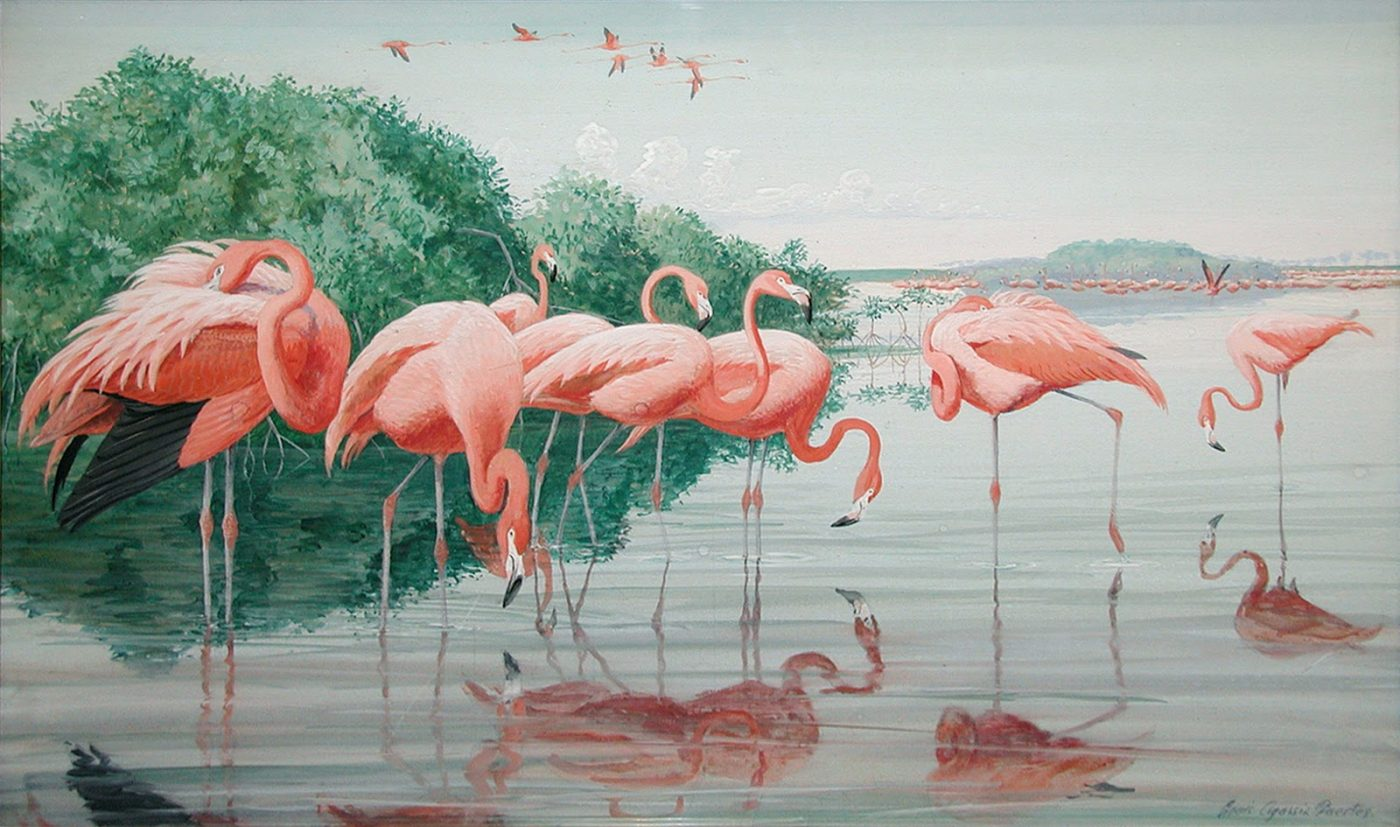 Flamingo Flying South, Joyce Dingwell, (or the best Pet Moppet in the world….)