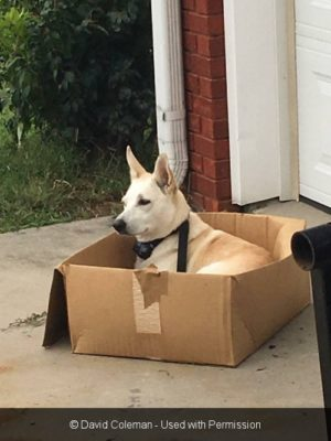 Why Dogs Like Cardboard Boxes