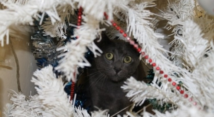 Ways to Keep a Kitten from Climbing the Christmas Tree