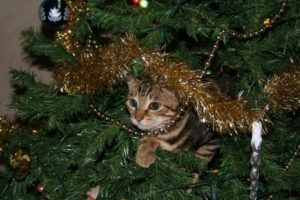 Keep a Kitten from Climbing the Christmas Tree