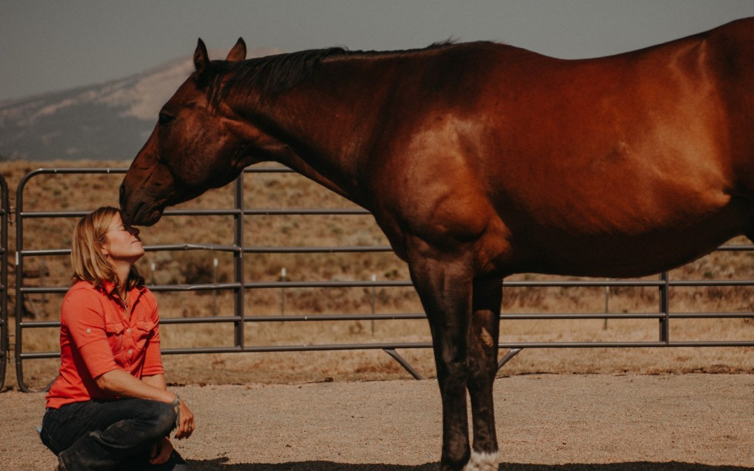 Why Horses Are Excellent Spiritual Teachers