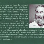 Whitman Postcard 6.0W x 4.25H