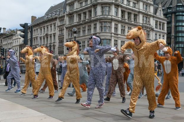 Dancers performing a flashmob as animals