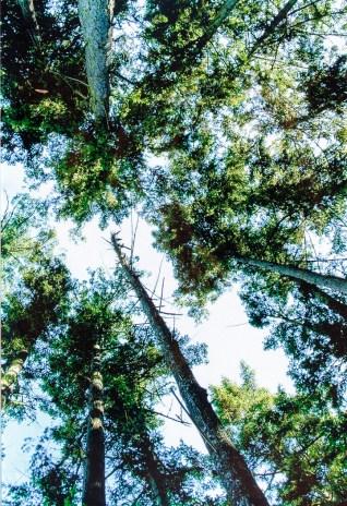 NewLook-TREES