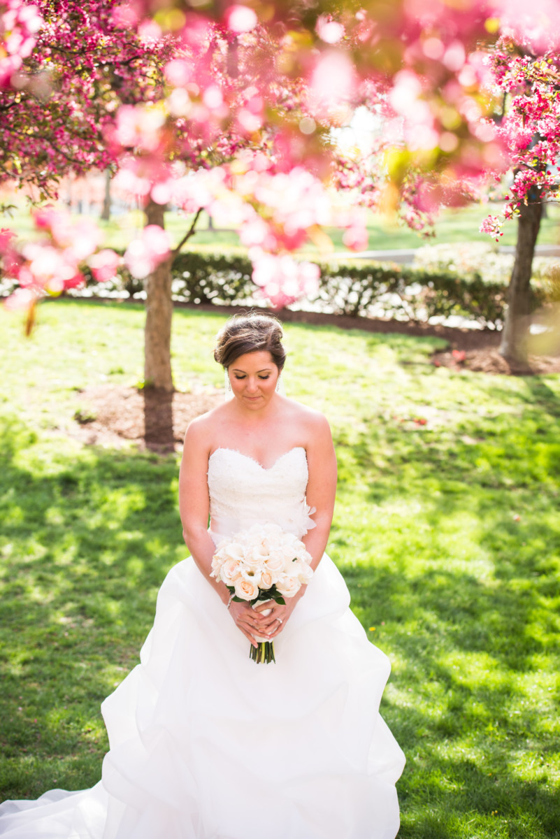 Lauren and Jimmy   Wedding at the Providence Biltmore   Bride under the blossoms