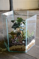 Geometric glass terrarium with succulents, ferns and moss