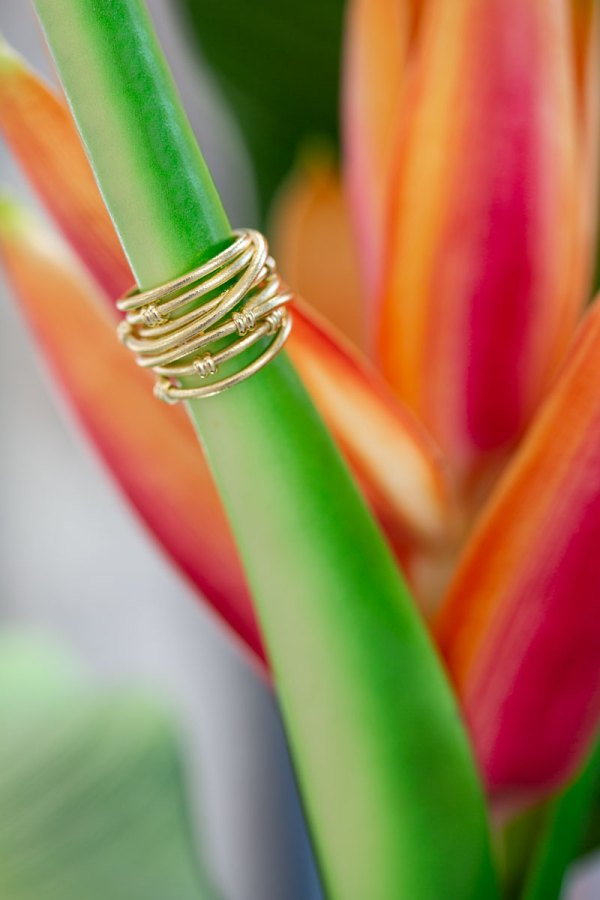 Yellow Gold Satin Fashion Ring on the stem of a flower.