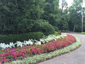 Photo of garden border