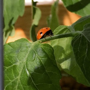 Photo of ladybug