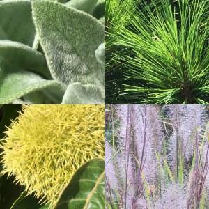 Photos of plants