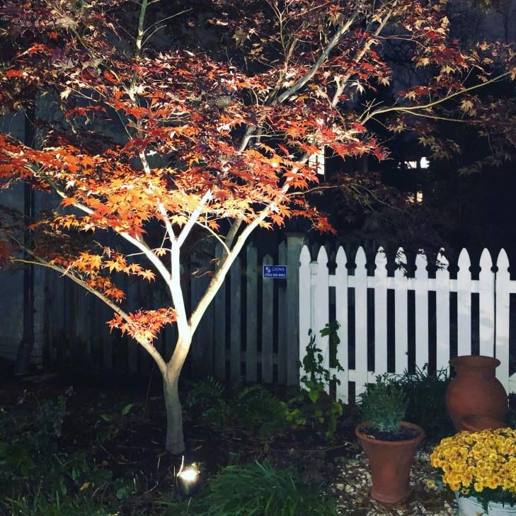 Photo of landscape lighting