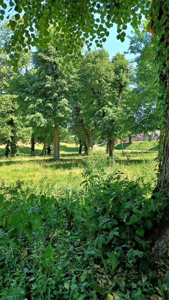 Kommunale Blühfläche