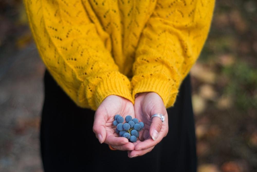 Dozorjeno grozdje v roki, fotografija od blizu