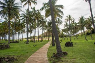 Visoke palme na Velikonočnem otoku