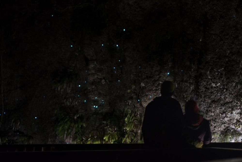 Glowworms in Waitomo (a must stop at New Zealand North Island Road Trip)