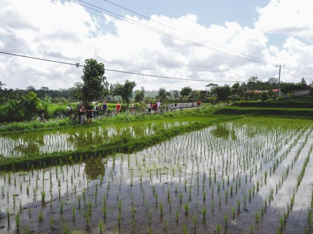 Kolesa med riževimi polji (ena izmed idej za izlete iz Ubuda)