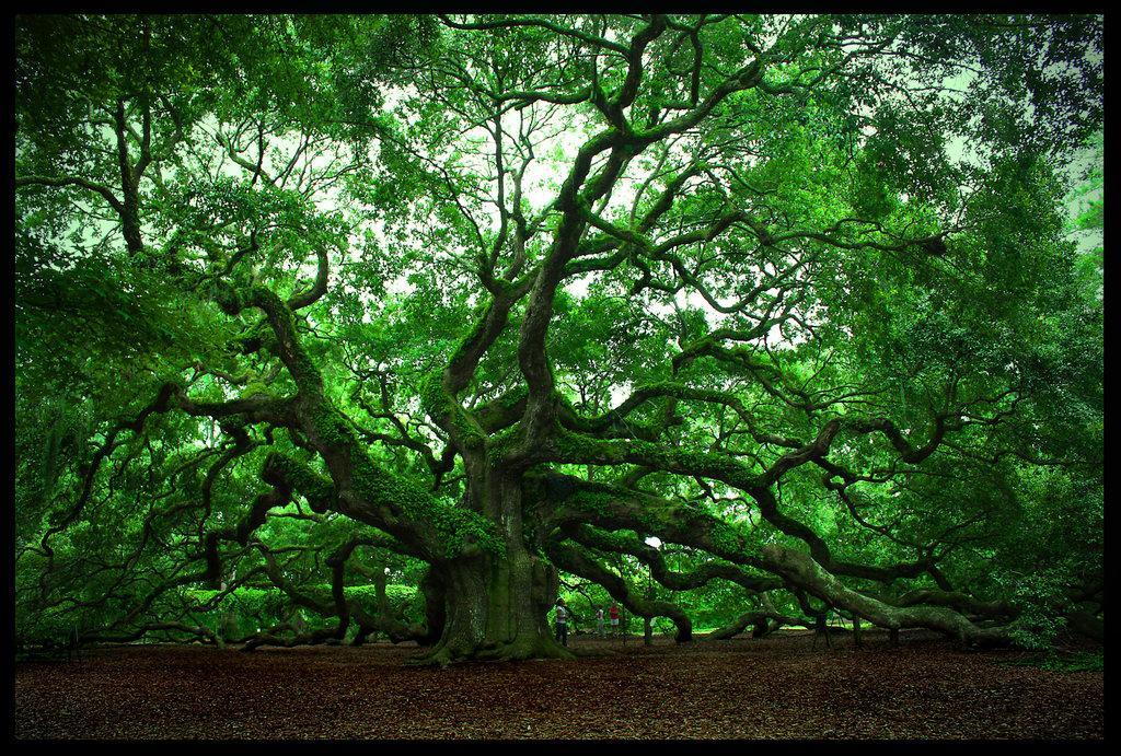 The Angel Oak taken by http://steelatlas.deviantart.com/