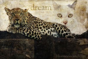 dream-leopard
