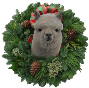 holiday-alpaca