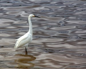 beach-bird