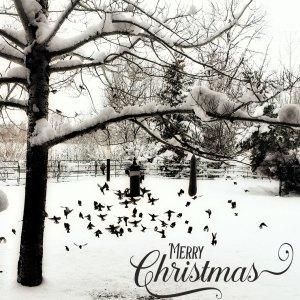 christmas-20155