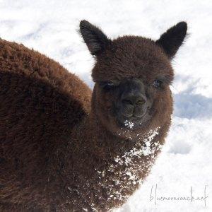 ciara-snow