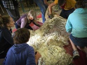 austin-shearing