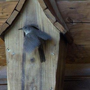 tiny-bird-3