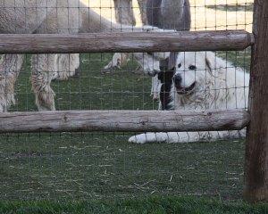 fence-drama2
