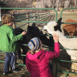 open-barn-day