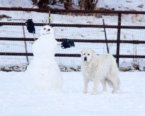 charlotte-snowman