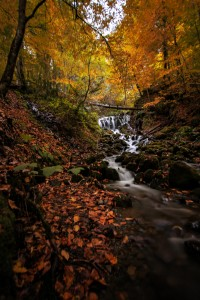 Autumn stream in the Great Smoky Mountains National Park