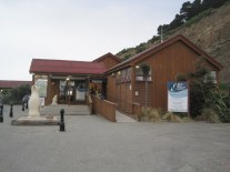 Blue Penguin Colony Building