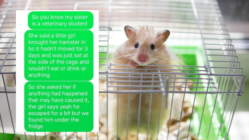 Scared Hamster Know Your Meme